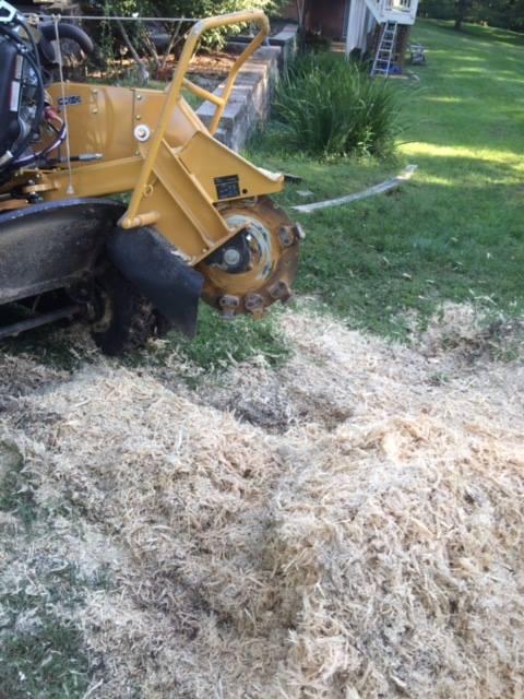 stump removal st louis