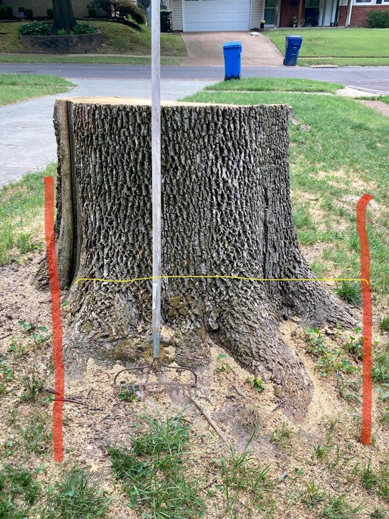 Measuring a Tree Stump St. Charles